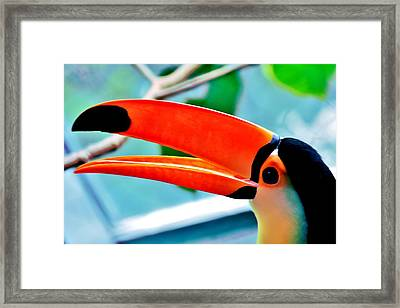 Sam Framed Print by Benjamin Yeager