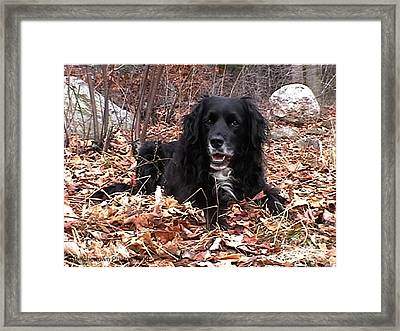 Sammi Smiling In Leaves Framed Print by Randi Shenkman