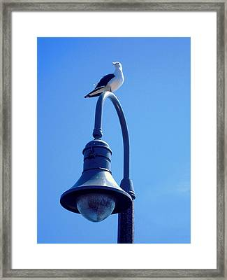San Clemente Sea Gull  Framed Print by Don Struke
