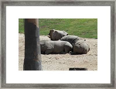 San Diego Zoo - 1212136 Framed Print by DC Photographer