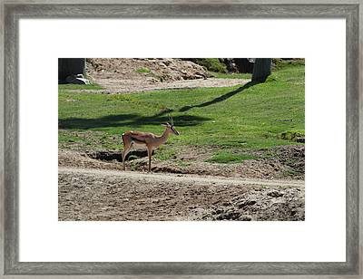 San Diego Zoo - 1212144 Framed Print by DC Photographer