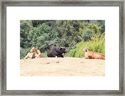 San Diego Zoo - 1212202 Framed Print by DC Photographer