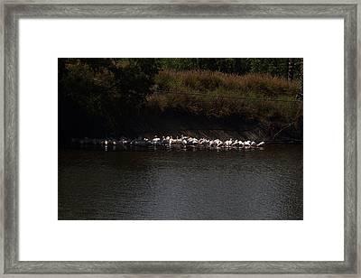 San Diego Zoo - 121222 Framed Print by DC Photographer