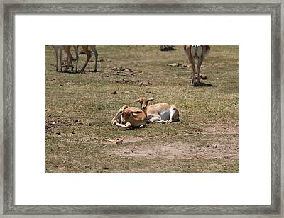 San Diego Zoo - 1212230 Framed Print by DC Photographer