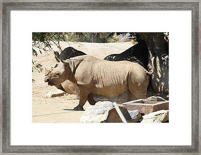 San Diego Zoo - 121227 Framed Print by DC Photographer