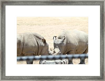 San Diego Zoo - 1212289 Framed Print by DC Photographer