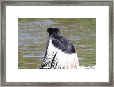 San Diego Zoo - 1212308 Framed Print by DC Photographer