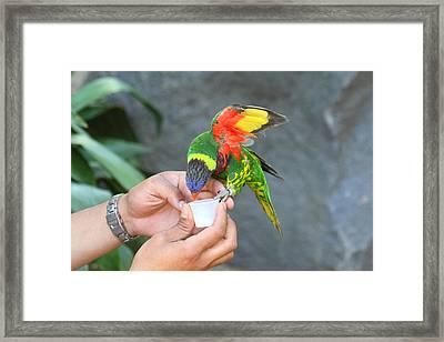 San Diego Zoo - 1212338 Framed Print by DC Photographer