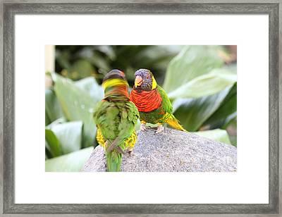 San Diego Zoo - 1212341 Framed Print by DC Photographer