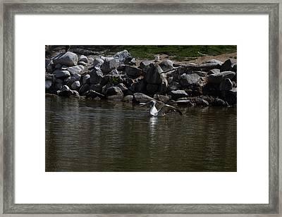 San Diego Zoo - 121243 Framed Print by DC Photographer