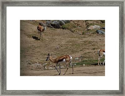 San Diego Zoo - 121266 Framed Print by DC Photographer