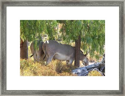 San Diego Zoo - 121280 Framed Print by DC Photographer