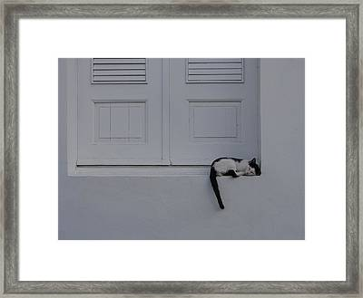 San Juan - Let Sleeping Cats Lie Framed Print by Richard Reeve