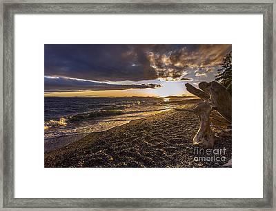 San Juans Majestic Driftwood Framed Print by Mike Reid