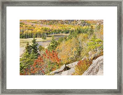 Sand Beach In Fall From Great Head Acadia National Park Photo Framed Print by Keith Webber Jr