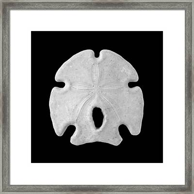 Keyhole Sand Dollar Framed Print by Jim Hughes