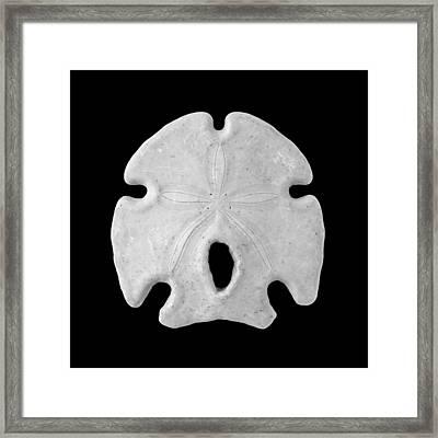 Keyhole Sand Dollar Framed Print by Jim Hughes