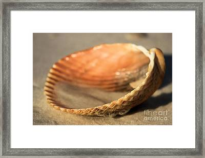 Sand In The Clam Framed Print by Adam Jewell