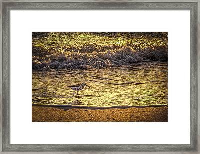 Sand Piper Framed Print by Marvin Spates