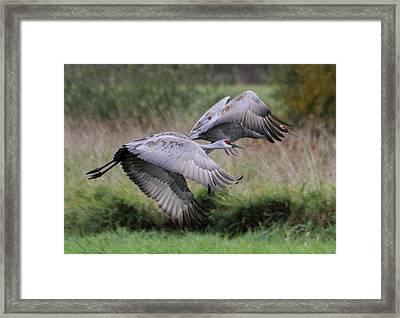 Sandhill Cranes Framed Print by Angie Vogel