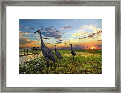 Sandhill Sunset Framed Print by Debra and Dave Vanderlaan