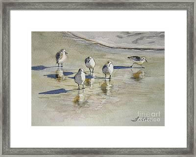 Sandpipers 2 Watercolor 5-13-12 Julianne Felton Framed Print by Julianne Felton