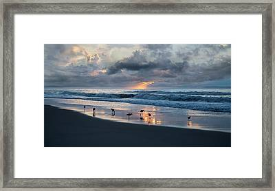 Sandpipers In Paradise Framed Print by Betsy C Knapp