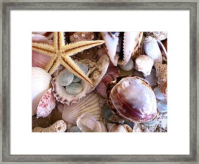 Sanibel Shells Framed Print by Colleen Kammerer