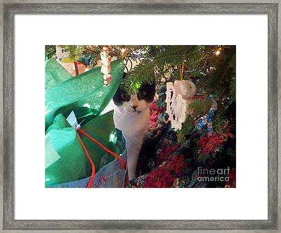 Christs Birthday Framed Print featuring the photograph Santa Bring Tuna by Chuck  Hicks