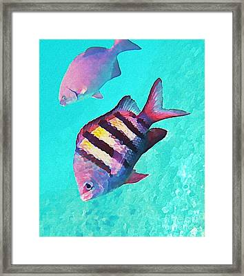 Sargeant Fish Framed Print by John Malone