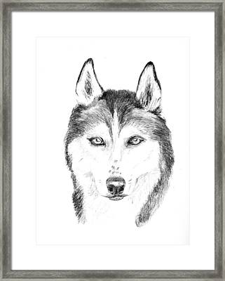 Sasha Framed Print by Jane Baribeau