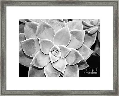 Sassy Succulent Framed Print by Sabrina L Ryan