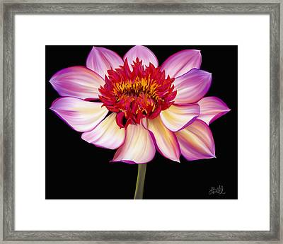 Satin Flames Framed Print by Laura Bell