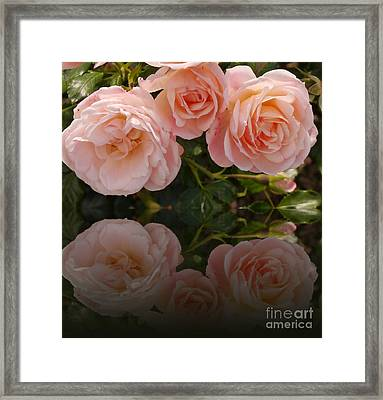 Satin Roses Framed Print by Christiane Schulze Art And Photography