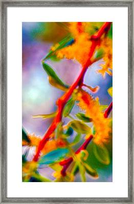 Saturated  Framed Print by Brent Dolliver