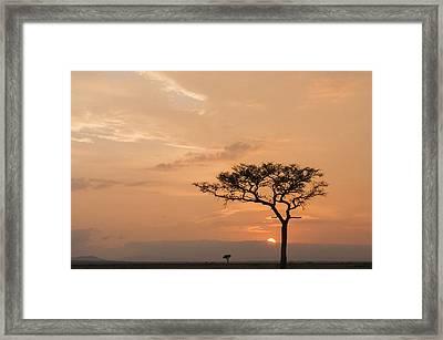 Savannah Dawn Framed Print by Phyllis Peterson