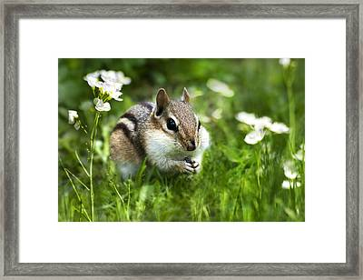 Saving Seeds Framed Print by Christina Rollo