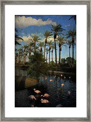 Savoring The Last Light Framed Print by Laurie Search