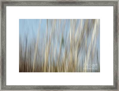 Sawgrass In Motion Framed Print by Benanne Stiens