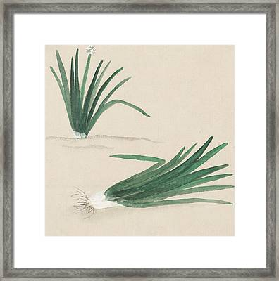 Scallions Framed Print by Aged Pixel