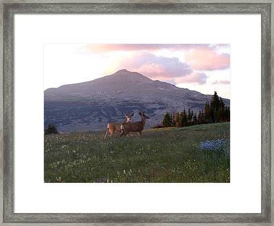 Scapegoat Deer Morning Alpenglow Framed Print by Pam Little