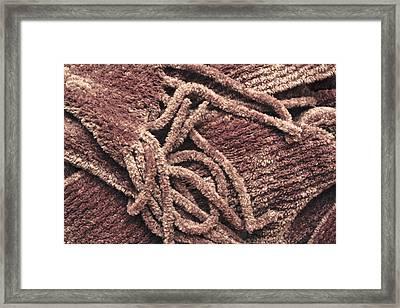 Scarf Close Up Framed Print by Tom Gowanlock