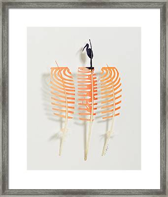 Scarlet Ibis Framed Print by Chris Maynard