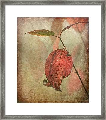 Scarlet Leaf Framed Print by Angie Vogel