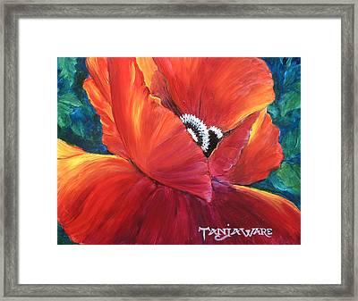 Scarlet Poppy Framed Print by Tanja Ware