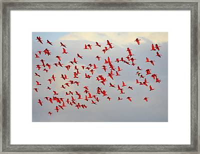 Scarlet Sky Framed Print by Tony Beck