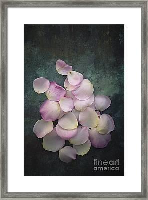 Scattered Rose Petals Framed Print by Maria Heyens