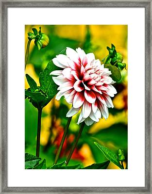 Scenic Bouquet Framed Print by Frozen in Time Fine Art Photography