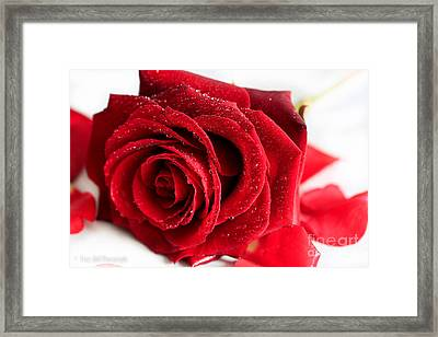 Scent Of A Rose Framed Print by Tracy  Hall