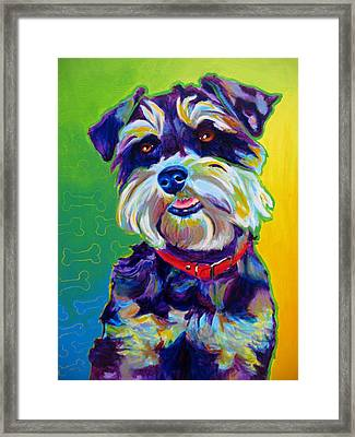 Schnauzer - Charly Framed Print by Alicia VanNoy Call